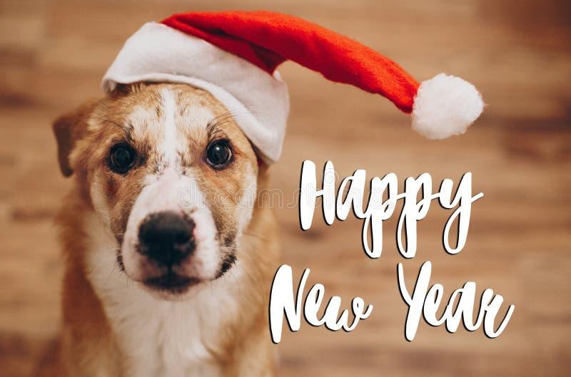 Texto do ano novo feliz, sinal sazonal do cartão de cumprimentos cão em Santa foto de stock