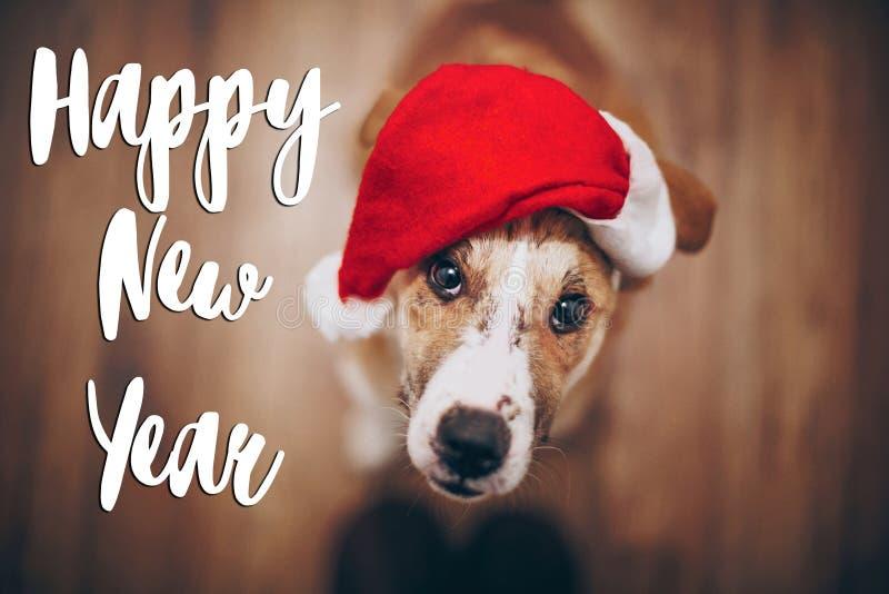 Texto do ano novo feliz, sinal sazonal do cartão de cumprimentos cão em Santa fotos de stock royalty free