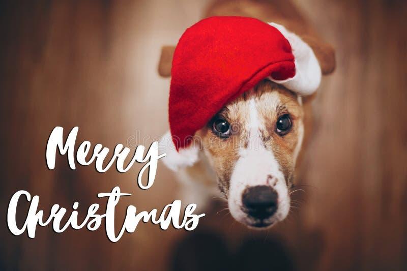 Texto do Feliz Natal, sinal sazonal do cartão de cumprimentos cão em Santa fotos de stock royalty free