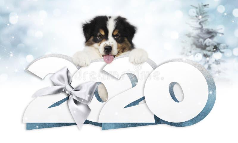 Texto feliz do novo ano 2020, cachorro de estimação com fita de natal prateada isolado em luzes azuis desfocadas fundo imagens de stock royalty free