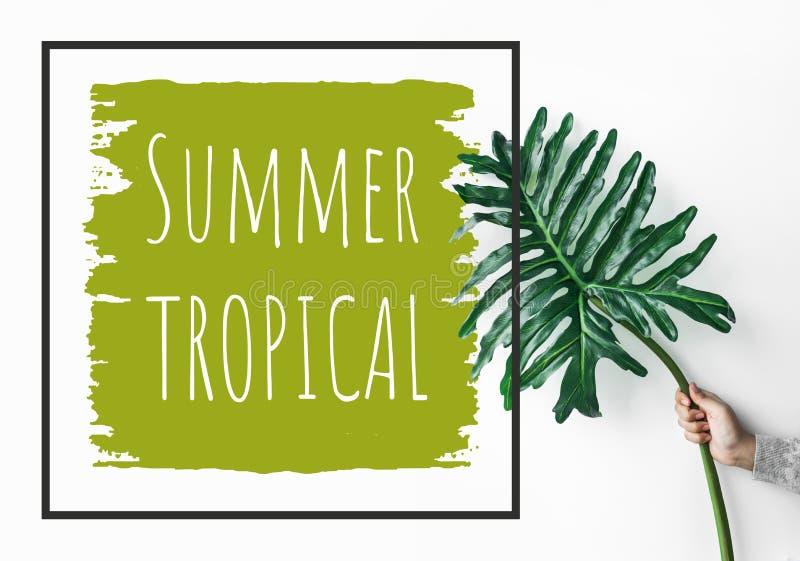 Texto Tropical Del Verano Con La Hoja Femenina Del Monstera Que Se ...