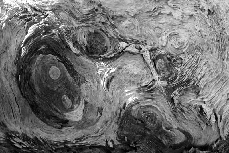 Textre de Diftwood noir et blanc images libres de droits