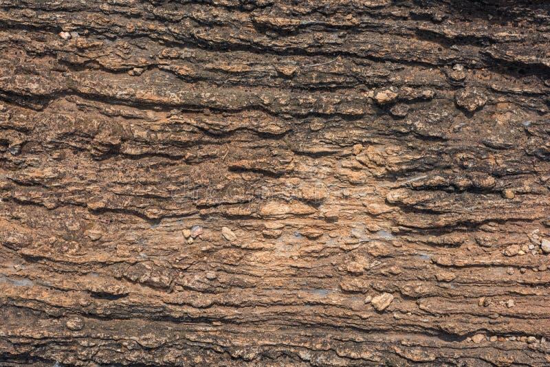 Textur av Calc-silikat vaggar (Metamorphic vagga), royaltyfria foton