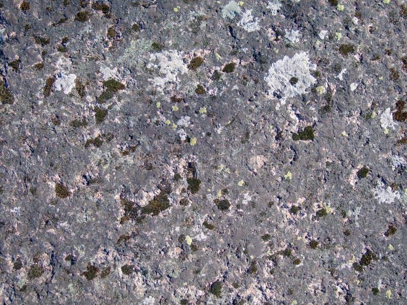 Textur av den gamla naturliga mossiga stenen royaltyfri bild