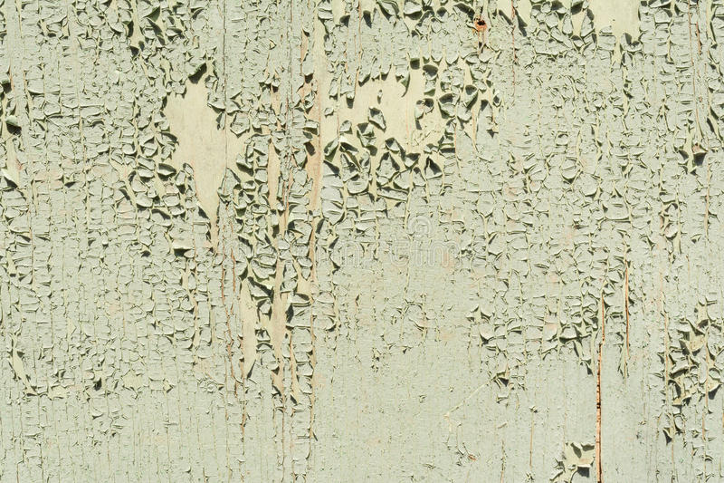 Textur av den gamla yttersidan av en trävägg som målas med grön målarfärg, ett lager av målarfärgflingor och nedgångar bak trädet arkivfoto