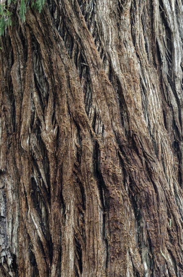 Textur av den stora gamla makroen för skäll för trädstam arkivfoto