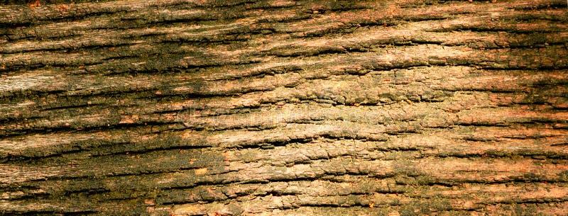 Textur av det bruna trädskället arkivbild