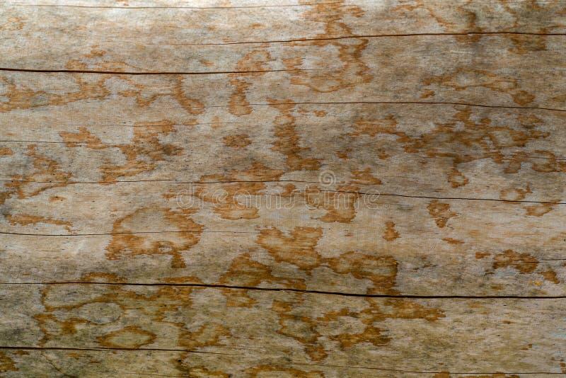 Textur av ett naturligt träd med en ovanlig struktur arkivbild