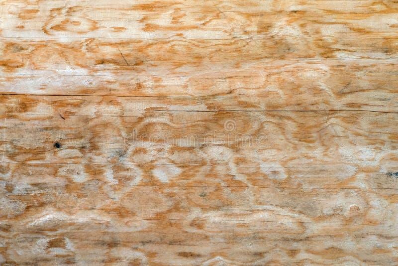 Textur av ett naturligt träd med en ovanlig struktur arkivfoton