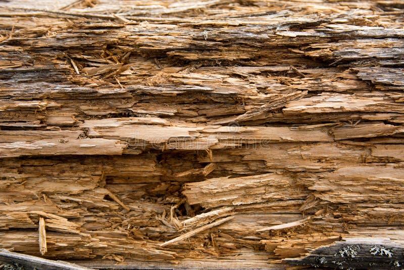 Textur av ett ruttet gammalt träd arkivfoton