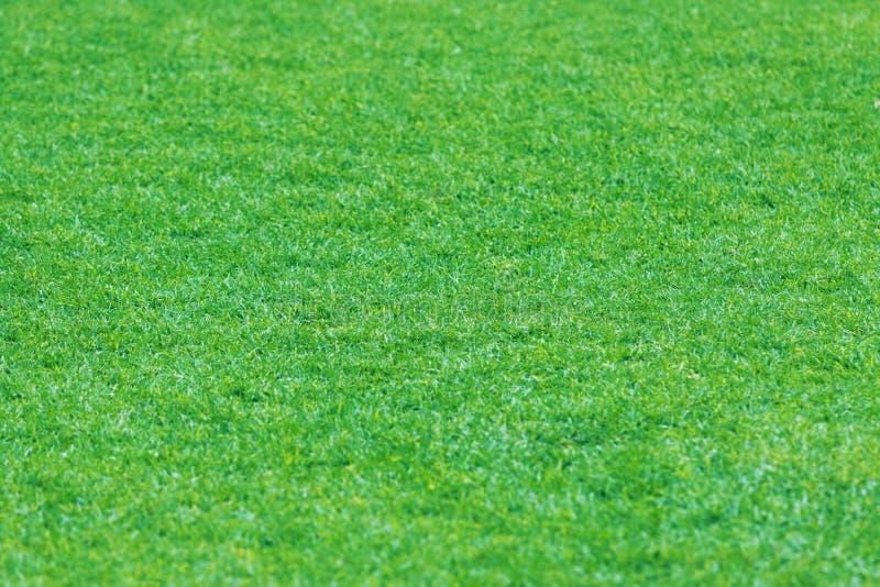 Textur av grönt gräs med fältet arkivbild