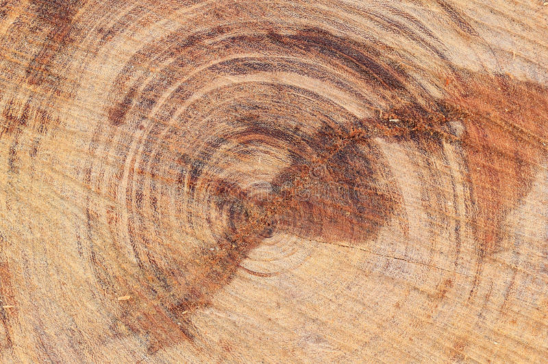 Textur av heartwood arkivbilder