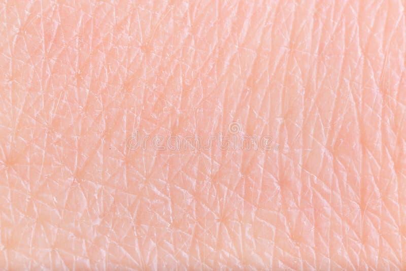 Textur av hud, closeup royaltyfri foto