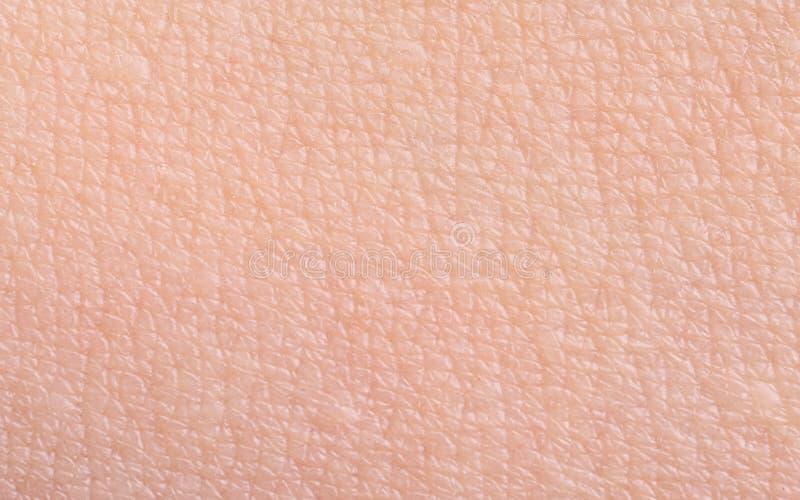 Textur av hud, closeup royaltyfri bild