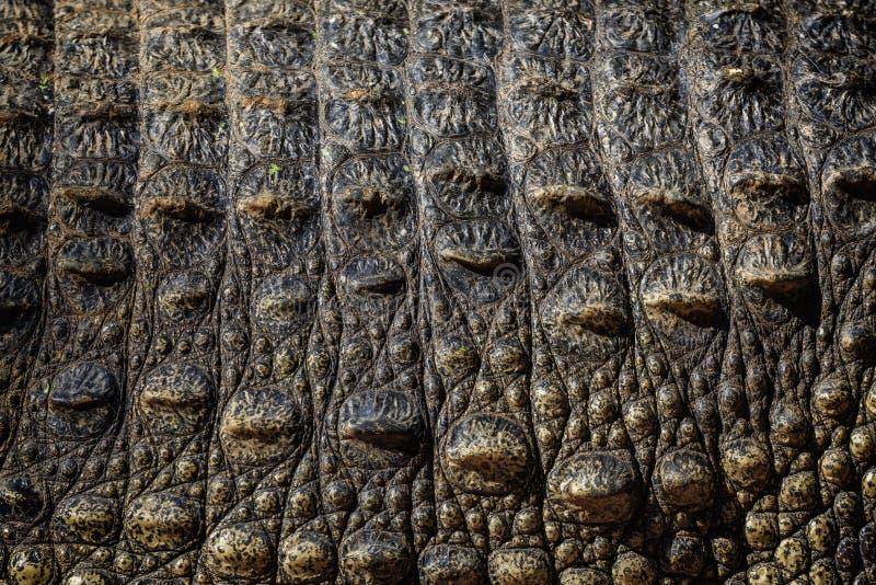 Textur av krokodilhudnärbilden royaltyfri bild