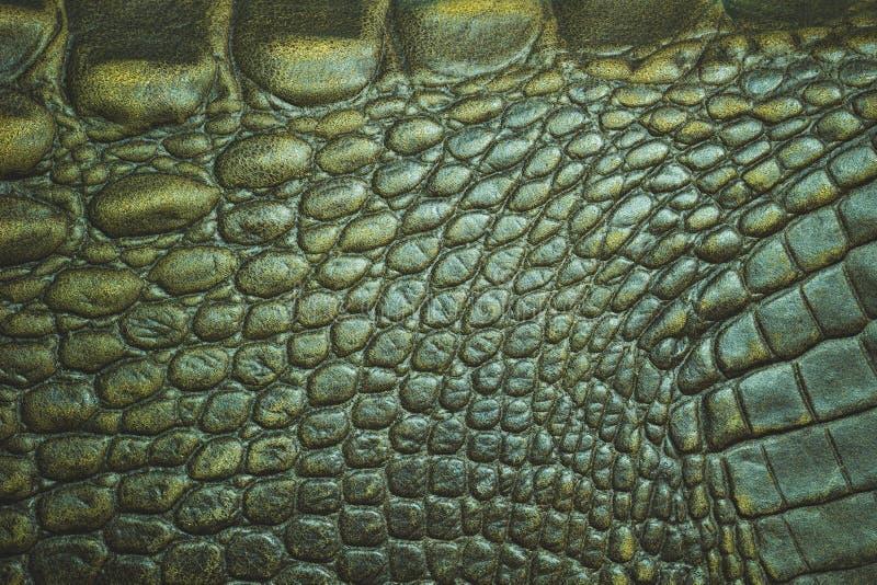 Textur av krokodilläderhud royaltyfria bilder