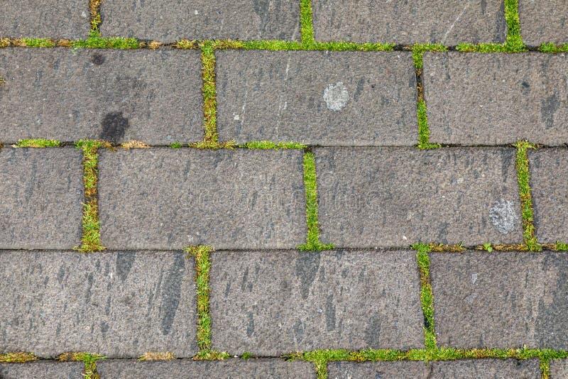 Textur av kullerstengatan som är bevuxen med mossa arkivbild