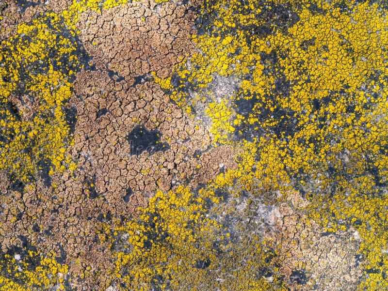 Textur av mång--färgad mossa på granitstenen royaltyfri bild
