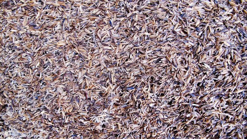 Textur av risskalet arkivfoton
