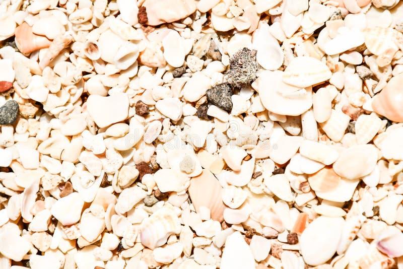 textur av sand och skal, foto som en bakgrund som tas i Nicoya, Costa Rica Central America vektor illustrationer
