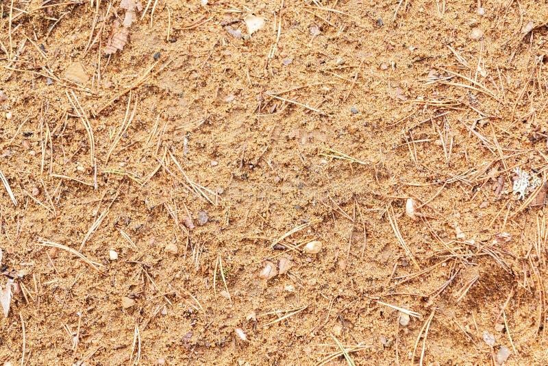Textur av skoggolvet - sand och att sörja visare arkivbild