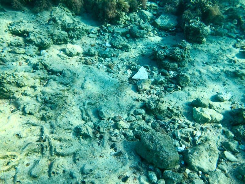 Textur av stenar, jord, havsbotten med korallrever och alger under blått grönaktigt vatten, undervattens- sikt av havet, havet i  royaltyfri foto