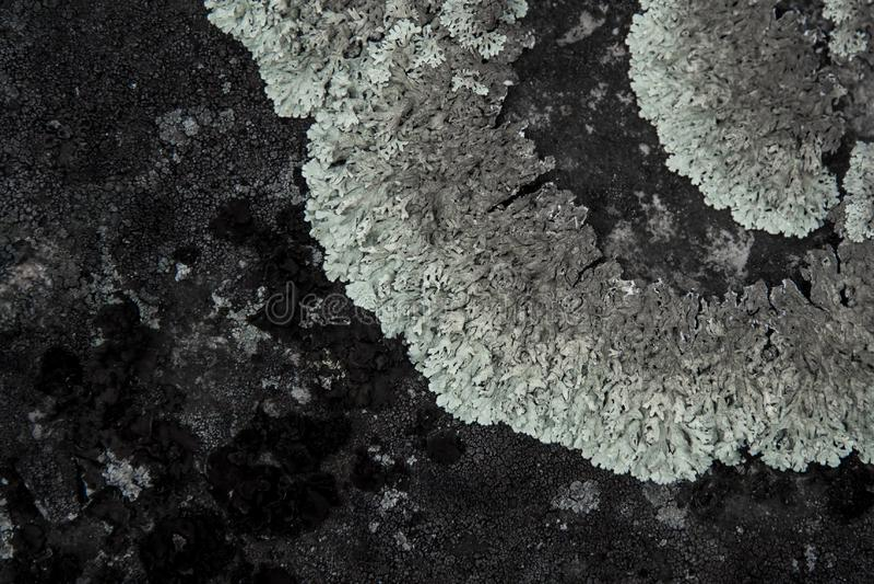 Textur av stenen med den gråa laven royaltyfria bilder
