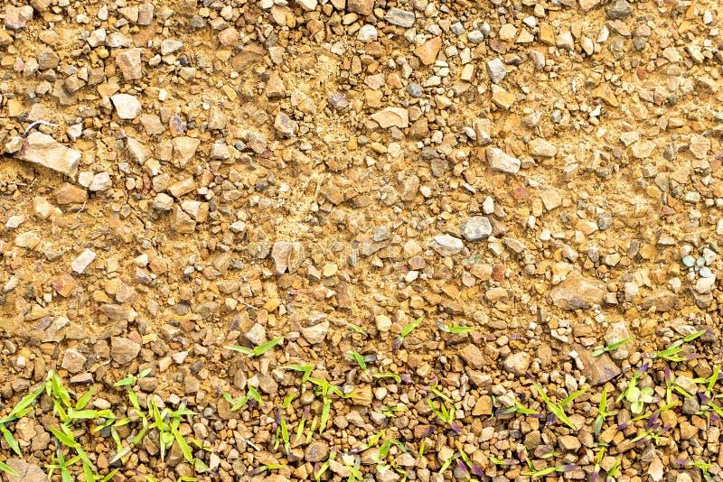 Textur av stenig jord med ungt gräs arkivbilder