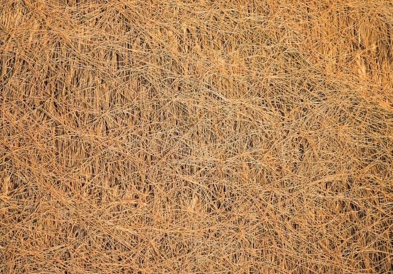 Textur av torkat sugrör som används som taket arkivbilder