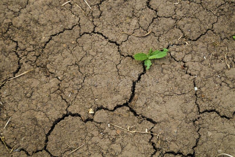 Textur av torr brun sprucken jord Brist av fuktighet på jorden, torka Begreppet av uttorkningland minimalistic arkivfoton