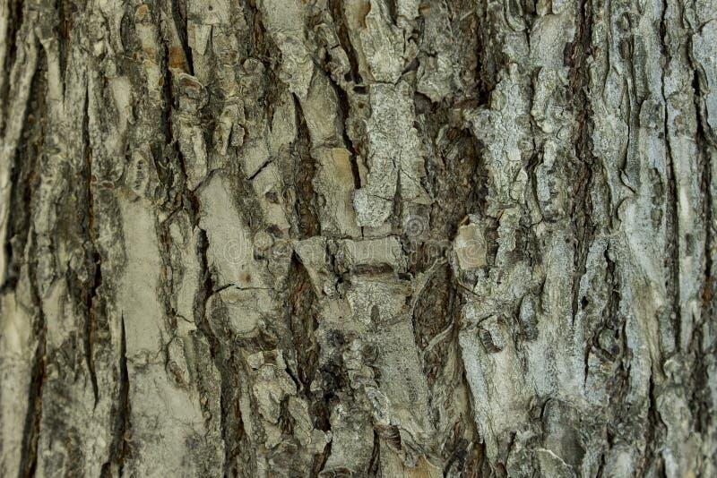 Textur av trädskället royaltyfri bild