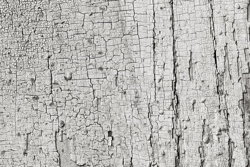 Textur av träladugårdbrädet bleknade kvarlevor av gammal målarfärg royaltyfria foton