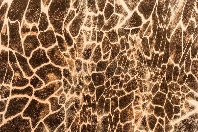 Textur av trycktyg gör randig giraffet arkivfoto