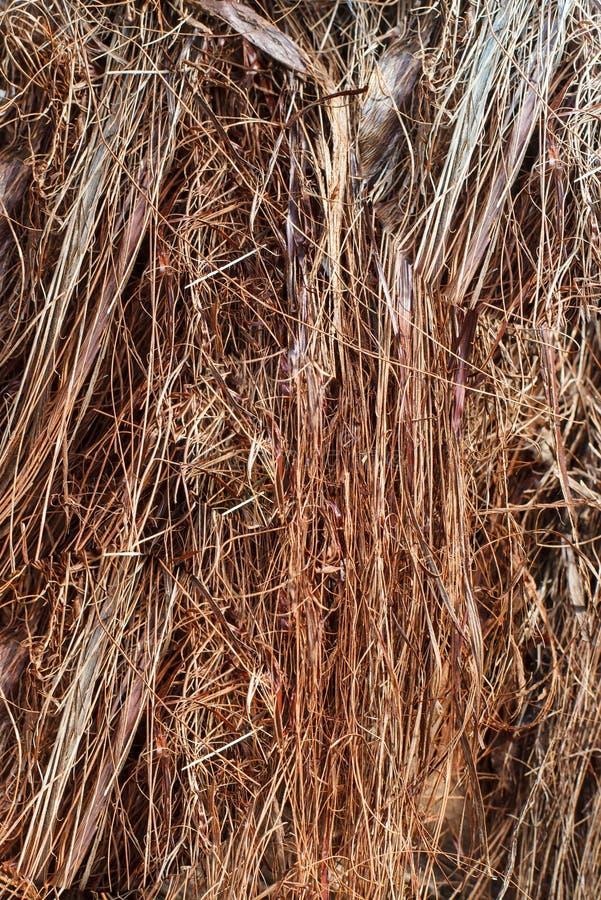 Textur av växtfibrerna fotografering för bildbyråer