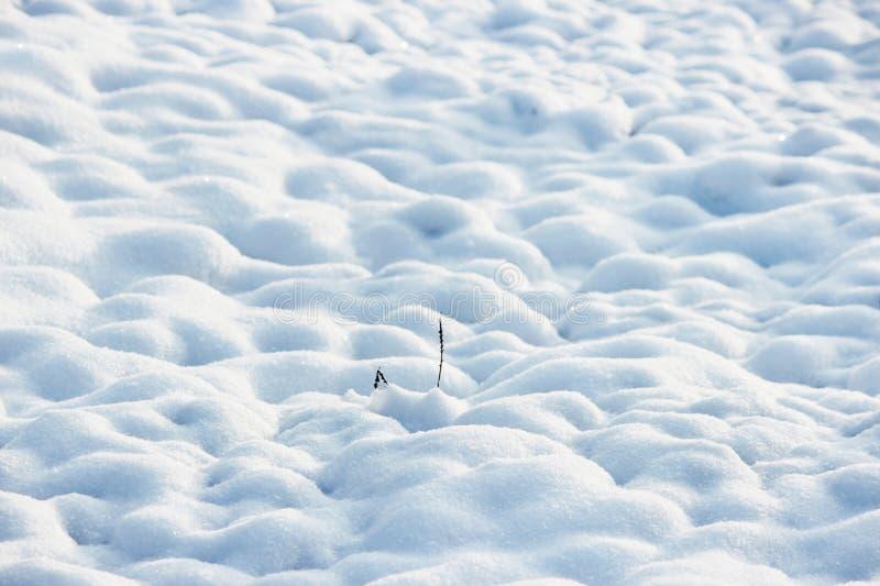 textur av vit snö som små drivor som täckte den grävde jorden royaltyfri bild