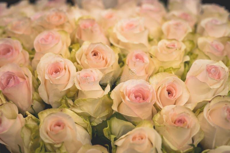 Textur av vita och rosa ömtåliga rosor arkivfoto
