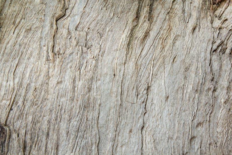 Textur av wood&bark royaltyfria foton