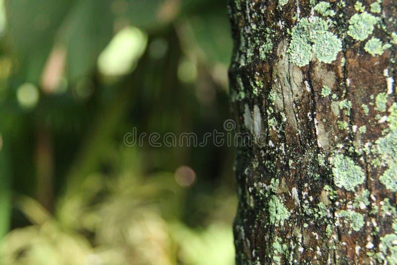 Textur av wood yttersida, isolerad utomhus- version 1 fotografering för bildbyråer