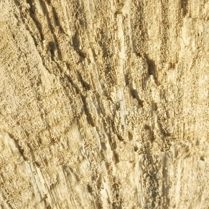 Textur bildade vid korallerna i kust- kalksten arkivbilder
