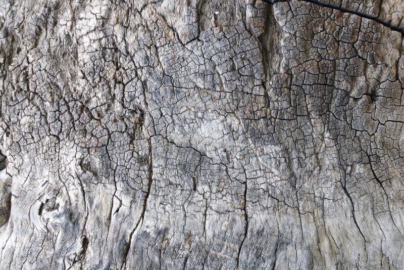 Textur der Rinde eines alten Sycamors lizenzfreie stockfotografie