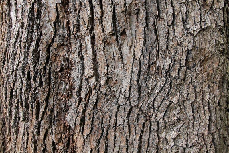 Textur för bakgrund för trädskäll arkivbilder
