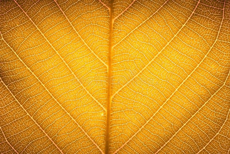 Textur för detalj för gul röd textur för höstbladmakro hög för naturbakgrund royaltyfri fotografi