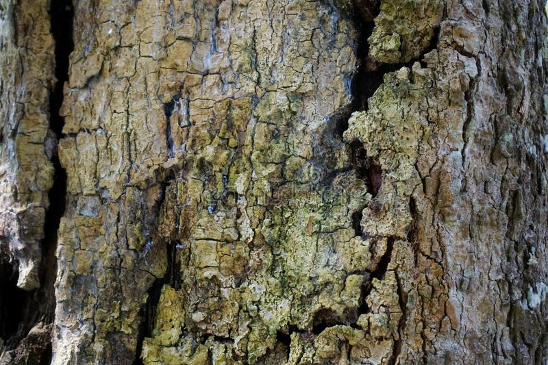 Textur för detalj för trädstam som naturlig bakgrund Tapet för textur för skällträd arkivfoto