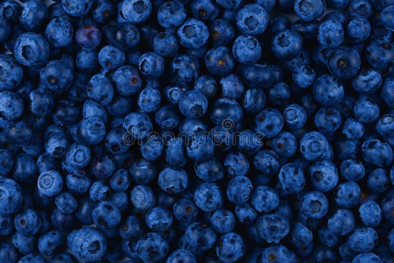 textur för frukt för bakgrundsblåbär ny arkivfoto