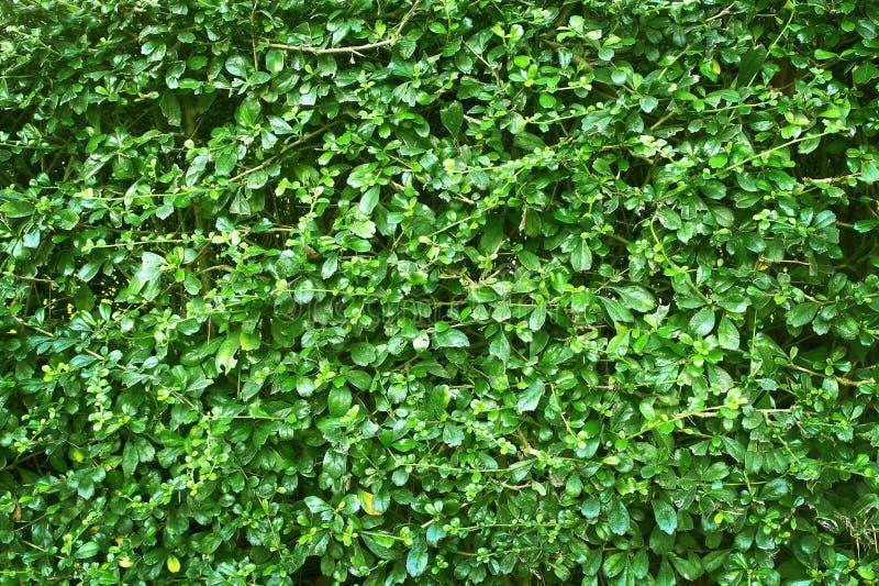 Textur för gräsplansidavägg eller bakgrund av trädstaketet Naturmodell för bakgrund och design royaltyfri foto