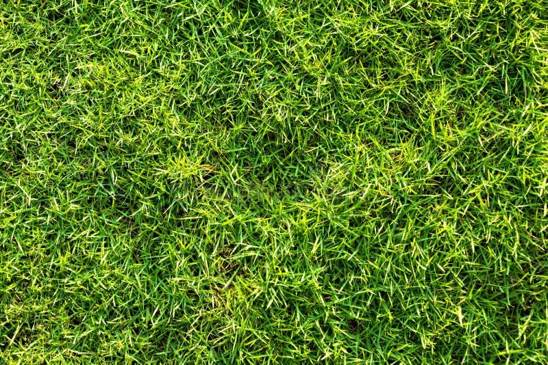 Textur för grönt gräs för en naturlig bakgrund royaltyfri bild