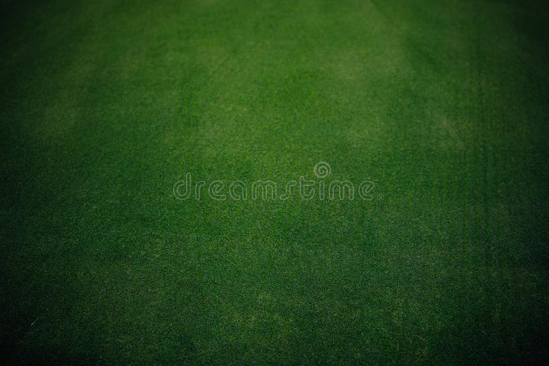 Textur för grönt gräs för golfbana royaltyfri fotografi