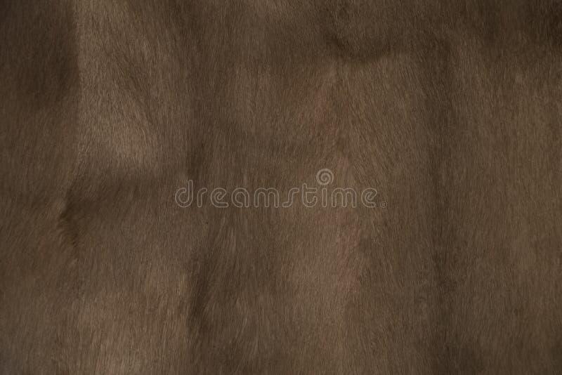 Textur för minkpälsbakgrund royaltyfria foton