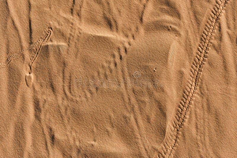 Textur för Sahara sanddyn arkivfoton
