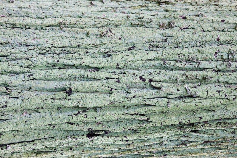Textur för skäll för naturlig gammal träbakgrund mossig trä fotografering för bildbyråer